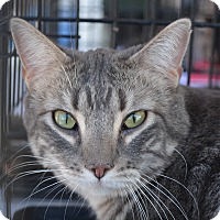 Adopt A Pet :: Molly - Ogden, UT