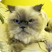 Adopt A Pet :: Q-Tip (and Rascal) - Marlborough, MA