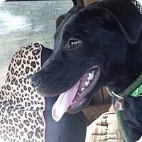 Adopt A Pet :: Brooks - Mesa, AZ