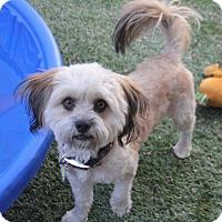 Adopt A Pet :: Agustin - Phoenix, AZ