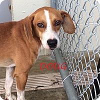 Adopt A Pet :: DOUG - Ventnor City, NJ
