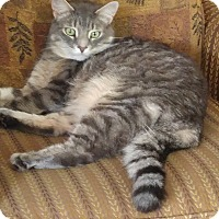 Adopt A Pet :: Gus - Richboro, PA