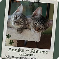 Adopt A Pet :: ANNIKA & ANTONIO - Lincoln, NE