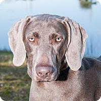 Adopt A Pet :: Raven - Loxahatchee, FL