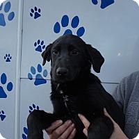 Adopt A Pet :: Sebastain - Oviedo, FL