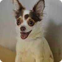 Adopt A Pet :: Suzie - Bernardston, MA