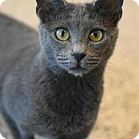 Adopt A Pet :: Tiny - Aiken, SC