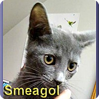 Adopt A Pet :: Smeagol - Aldie, VA
