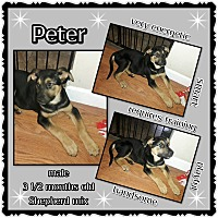 Adopt A Pet :: Peter - Richmond, CA
