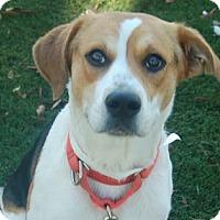 Adopt A Pet :: Chex - Bradenton, FL