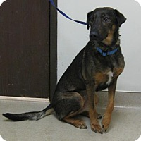 Adopt A Pet :: Shadow - Gary, IN