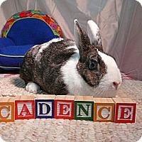 Adopt A Pet :: Cadence - Newport, DE