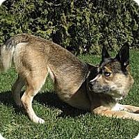 Adopt A Pet :: Meeka - Hamilton, ON