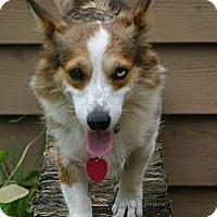 Adopt A Pet :: Touche - Cantonment, FL