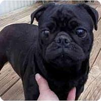 Adopt A Pet :: Precious - Staunton, VA