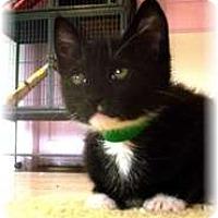 Adopt A Pet :: Ramona - Shelton, WA