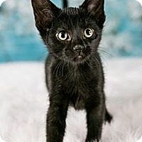Adopt A Pet :: Allie - Eagan, MN
