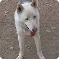 Adopt A Pet :: Ranger - Golden, CO