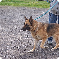 Adopt A Pet :: LACY - Tully, NY