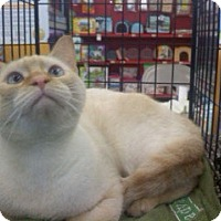 Adopt A Pet :: Este - Melbourne, FL