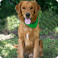 Adopt A Pet :: Luke - Carencro, LA