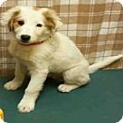 Adopt A Pet :: *VOCAL
