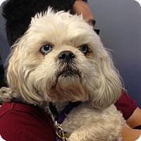 Adopt A Pet :: Vinton - Studio City, CA