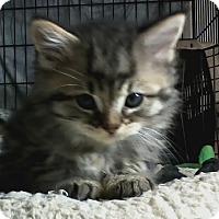 Adopt A Pet :: Leo - bloomfield, NJ