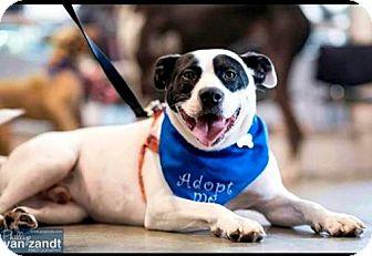 Labrador Retriever Mix Dog for adoption in Olive Branch, Mississippi - Remi