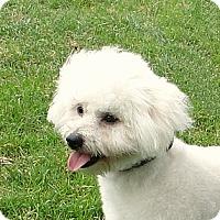 Adopt A Pet :: Jasper - Walnut Creek, CA