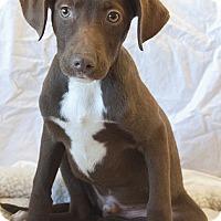 Adopt A Pet :: Mojito - Mt. Prospect, IL