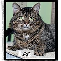 Adopt A Pet :: Leo - Warren, PA