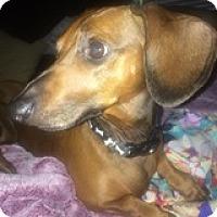 Adopt A Pet :: Nute Gunray - Houston, TX