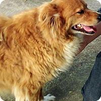 Adopt A Pet :: Lady II - BIRMINGHAM, AL