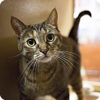 Adopt A Pet :: Brea - Toronto, ON