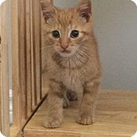 Adopt A Pet :: Cedro - Toronto, ON