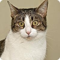 Adopt A Pet :: Dora - Cashiers, NC