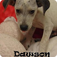 Labrador Retriever/Hound (Unknown Type) Mix Puppy for adoption in Ringwood, New Jersey - Dawson