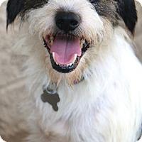 Adopt A Pet :: Wilkins - Woonsocket, RI