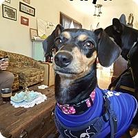 Adopt A Pet :: Yuya - Vancouver, BC