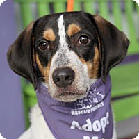 Hound (Unknown Type) Mix Dog for adoption in Pacific Grove, California - Fred