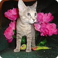Adopt A Pet :: Kiera - Chicago, IL