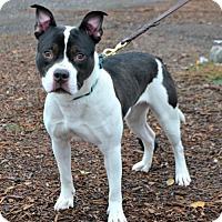Adopt A Pet :: Mercy - Yreka, CA