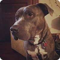 Adopt A Pet :: Zeke - Villa Park, IL