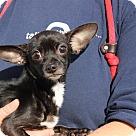 Adopt A Pet :: Elsa Littles