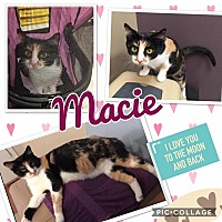 Adopt A Pet :: Macie - Keller, TX