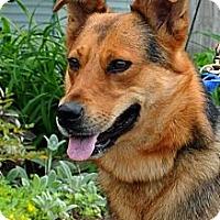 Adopt A Pet :: Georgie - Wayland, MA