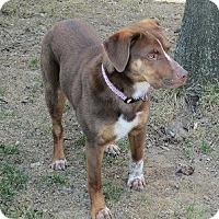 Adopt A Pet :: Darby - Hamilton, ON
