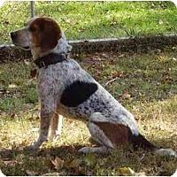 Adopt A Pet :: Ollie Baba - Cape Girardeau, MO