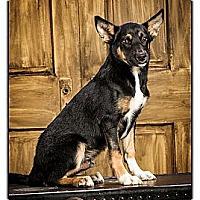 Adopt A Pet :: Vincent - Owensboro, KY